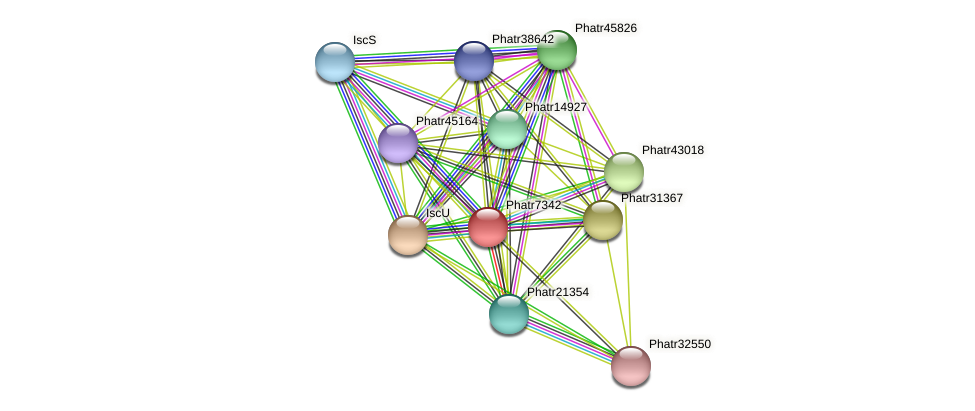 Phatr7342 protein (Phaeodactylum tricornutum) - STRING interaction network