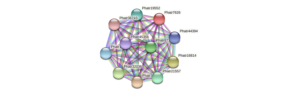Phatr7626 protein (Phaeodactylum tricornutum) - STRING interaction network
