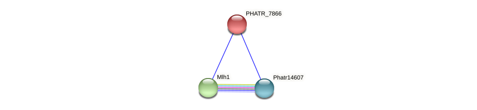 PHATR_7866 protein (Phaeodactylum tricornutum) - STRING interaction network