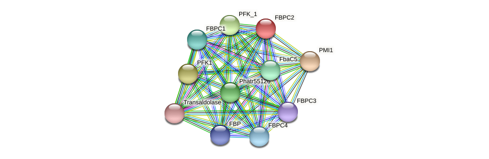 FBPC2 protein (Phaeodactylum tricornutum) - STRING interaction network