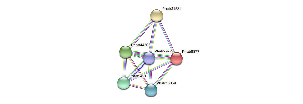 Phatr8877 protein (Phaeodactylum tricornutum) - STRING interaction network