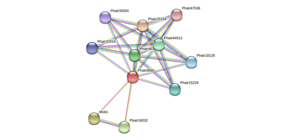 Phatr8890 protein (Phaeodactylum tricornutum) - STRING interaction network