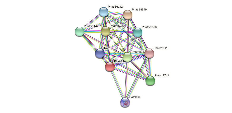 Phatr8996 protein (Phaeodactylum tricornutum) - STRING interaction network