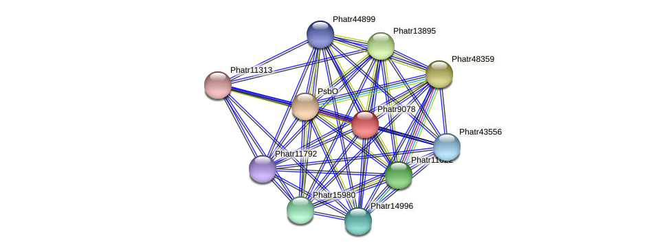 Phatr9078 protein (Phaeodactylum tricornutum) - STRING interaction network