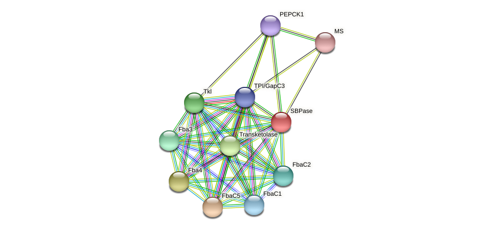 SBPase protein (Phaeodactylum tricornutum) - STRING interaction network