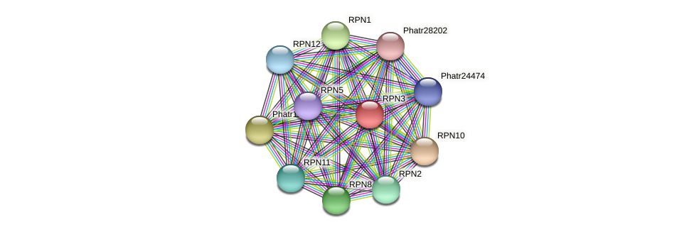 RPN3 protein (Phaeodactylum tricornutum) - STRING interaction network