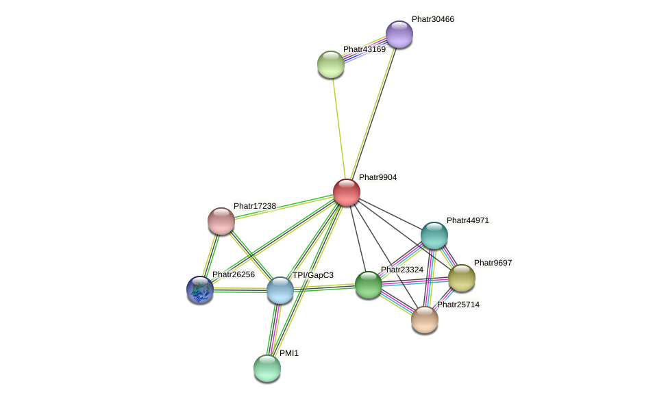 Phatr9904 protein (Phaeodactylum tricornutum) - STRING interaction network