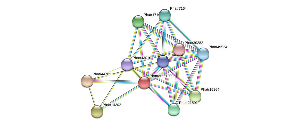 Phatrdraft1000 protein (Phaeodactylum tricornutum) - STRING interaction network