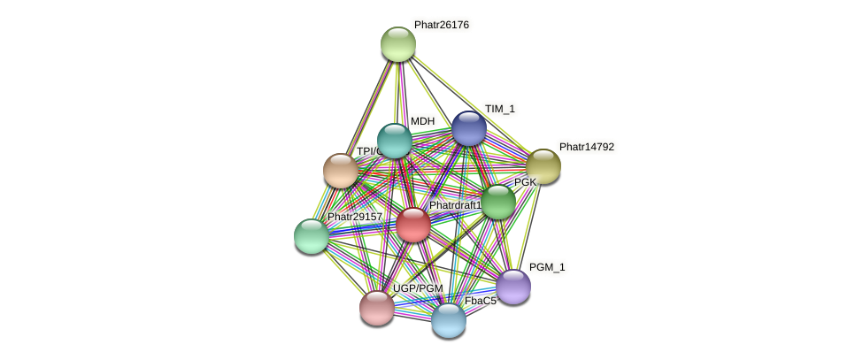 Phatrdraft1192 protein (Phaeodactylum tricornutum) - STRING interaction network