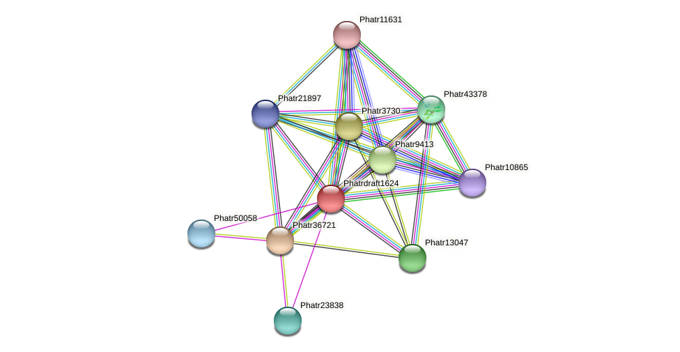 Phatrdraft1624 protein (Phaeodactylum tricornutum) - STRING interaction network