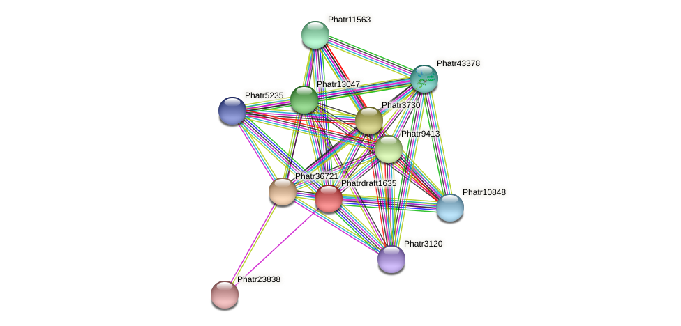 Phatrdraft1635 protein (Phaeodactylum tricornutum) - STRING interaction network