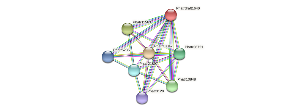 Phatrdraft1640 protein (Phaeodactylum tricornutum) - STRING interaction network