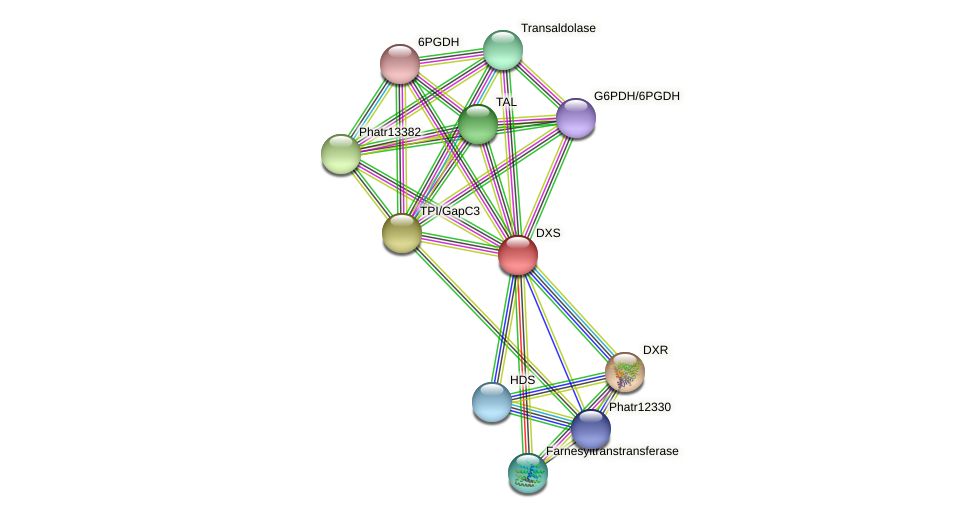 DXS protein (Phaeodactylum tricornutum) - STRING interaction network