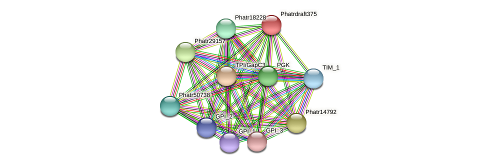 Phatrdraft375 protein (Phaeodactylum tricornutum) - STRING interaction network