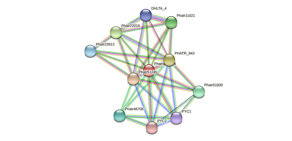 Phatrdraft976 protein (Phaeodactylum tricornutum) - STRING interaction network