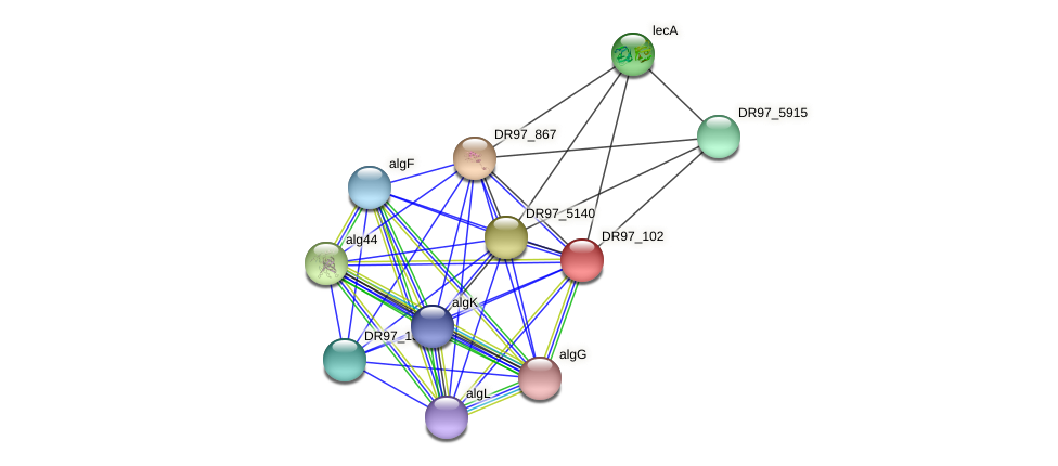 DR97_102 protein (Pseudomonas aeruginosa) - STRING interaction network