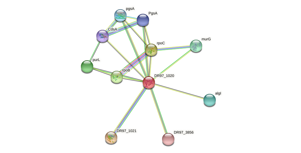DR97_1020 protein (Pseudomonas aeruginosa) - STRING interaction network