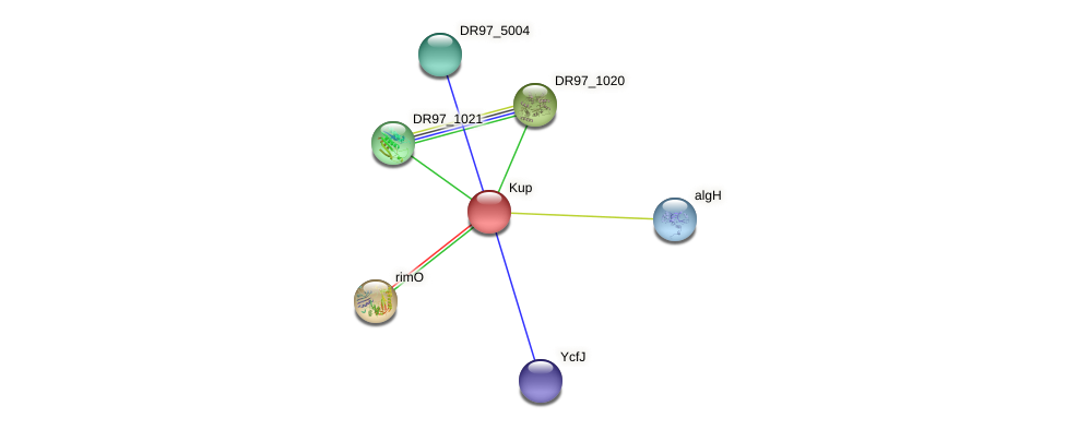 DR97_1022 protein (Pseudomonas aeruginosa) - STRING interaction network