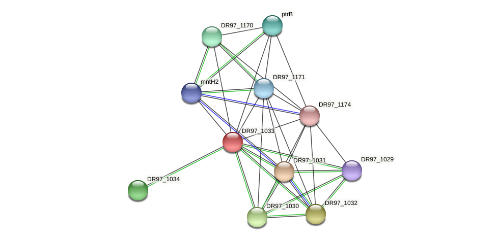 DR97_1033 protein (Pseudomonas aeruginosa) - STRING interaction network