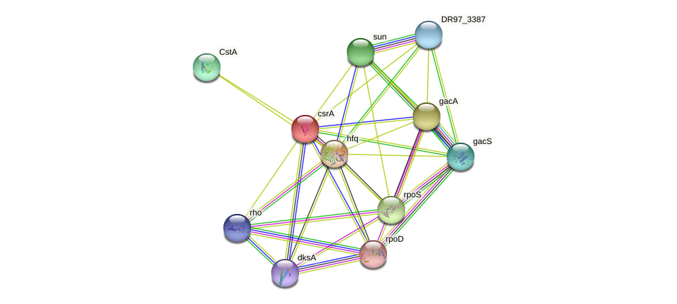 DR97_1038 protein (Pseudomonas aeruginosa) - STRING interaction network