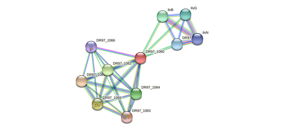 DR97_1060 protein (Pseudomonas aeruginosa) - STRING interaction network