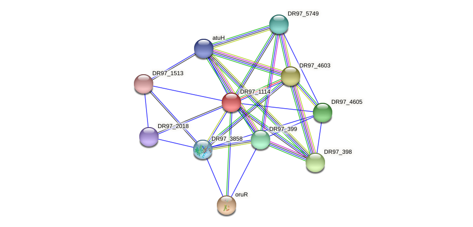 DR97_1114 protein (Pseudomonas aeruginosa) - STRING interaction network