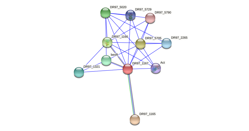 DR97_1167 protein (Pseudomonas aeruginosa) - STRING interaction network