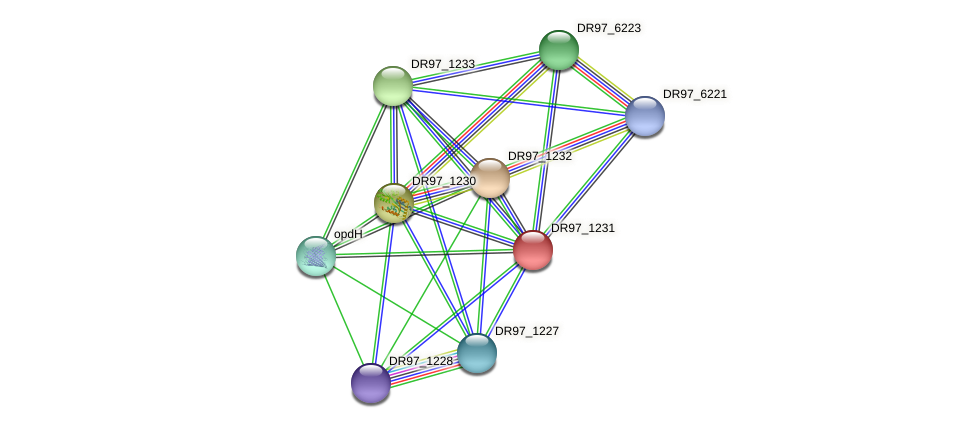 DR97_1231 protein (Pseudomonas aeruginosa) - STRING interaction network