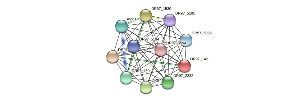 DR97_142 protein (Pseudomonas aeruginosa) - STRING interaction network