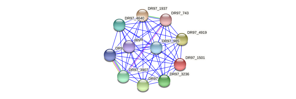 DR97_1501 protein (Pseudomonas aeruginosa) - STRING interaction network