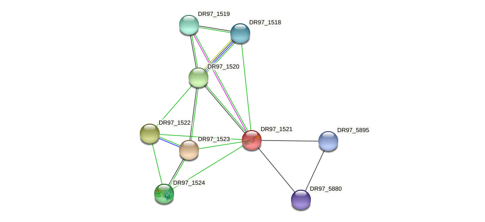 DR97_1521 protein (Pseudomonas aeruginosa) - STRING interaction network