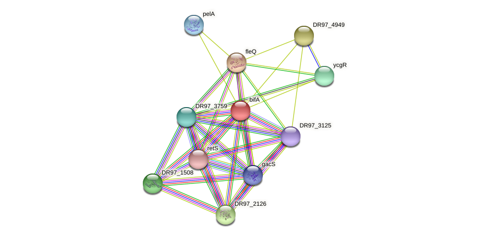 bifA protein (Pseudomonas aeruginosa) - STRING interaction network