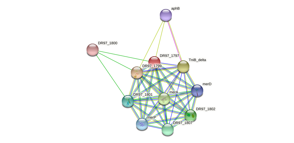 tnpA protein (Pseudomonas aeruginosa) - STRING interaction network