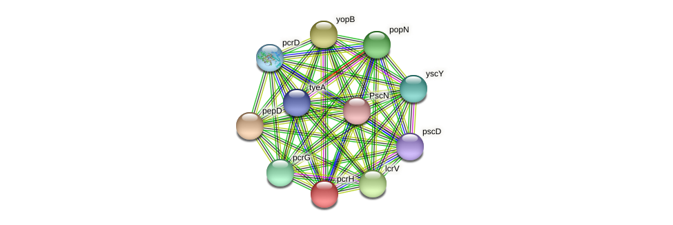 lcrH protein (Pseudomonas aeruginosa) - STRING interaction network
