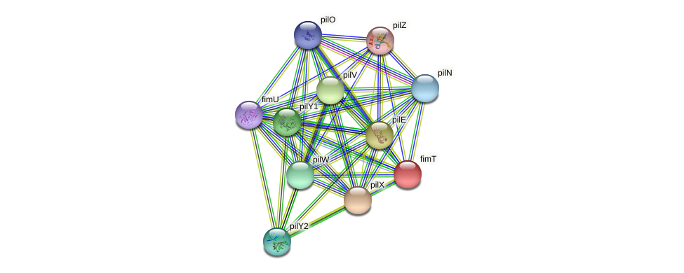 fimT protein (Pseudomonas aeruginosa) - STRING interaction network