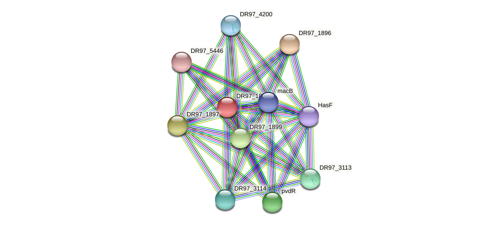 DR97_1898 protein (Pseudomonas aeruginosa) - STRING interaction network