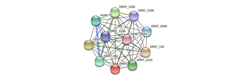 DR97_1930 protein (Pseudomonas aeruginosa) - STRING interaction network