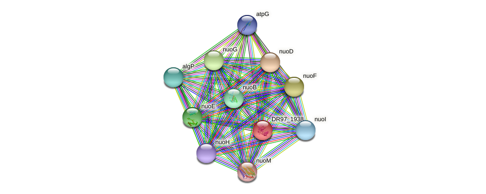 DR97_1938 protein (Pseudomonas aeruginosa) - STRING interaction network
