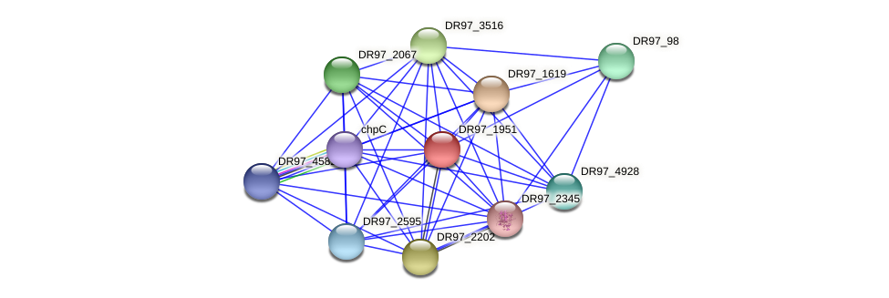 DR97_1951 protein (Pseudomonas aeruginosa) - STRING interaction network