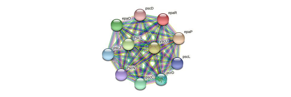epaR protein (Pseudomonas aeruginosa) - STRING interaction network