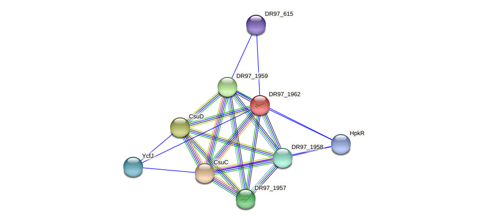 DR97_1962 protein (Pseudomonas aeruginosa) - STRING interaction network