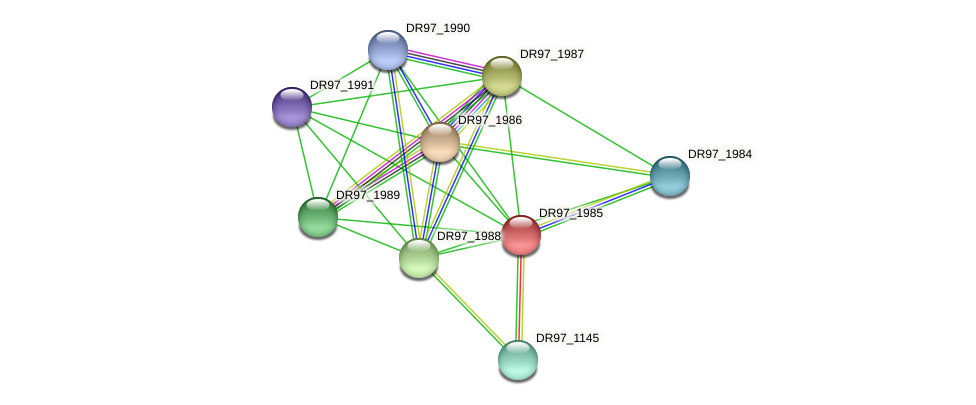 DR97_1985 protein (Pseudomonas aeruginosa) - STRING interaction network