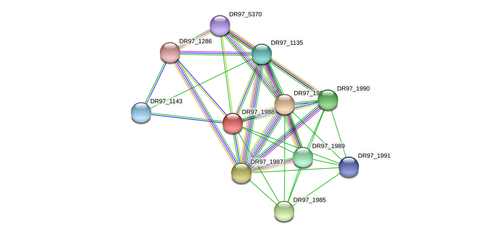 DR97_1988 protein (Pseudomonas aeruginosa) - STRING interaction network