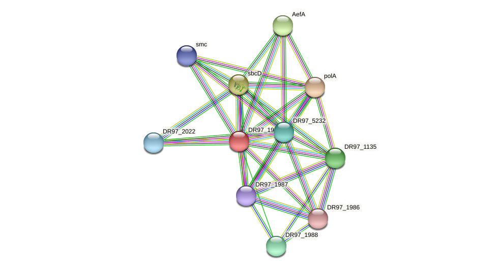 DR97_1989 protein (Pseudomonas aeruginosa) - STRING interaction network