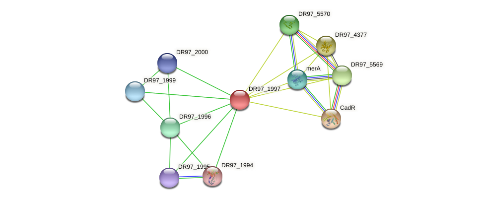 DR97_1997 protein (Pseudomonas aeruginosa) - STRING interaction network