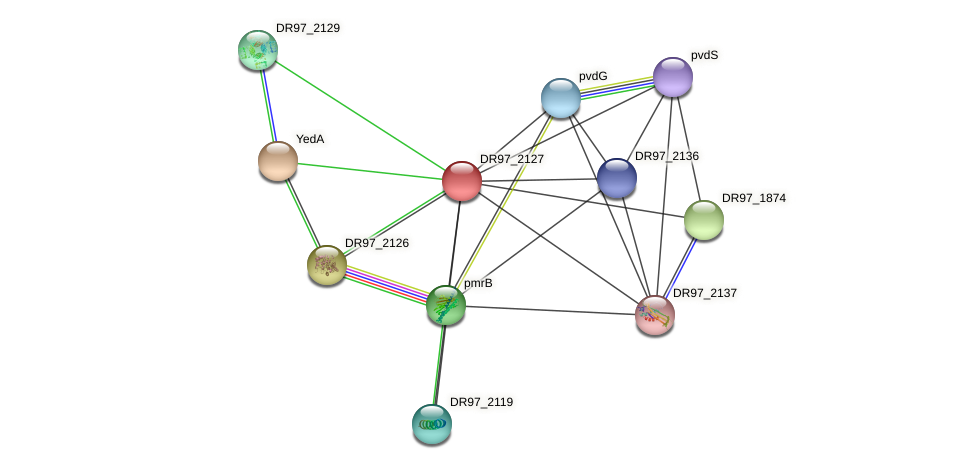 DR97_2127 protein (Pseudomonas aeruginosa) - STRING interaction network
