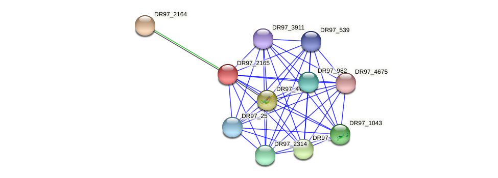 DR97_2165 protein (Pseudomonas aeruginosa) - STRING interaction network