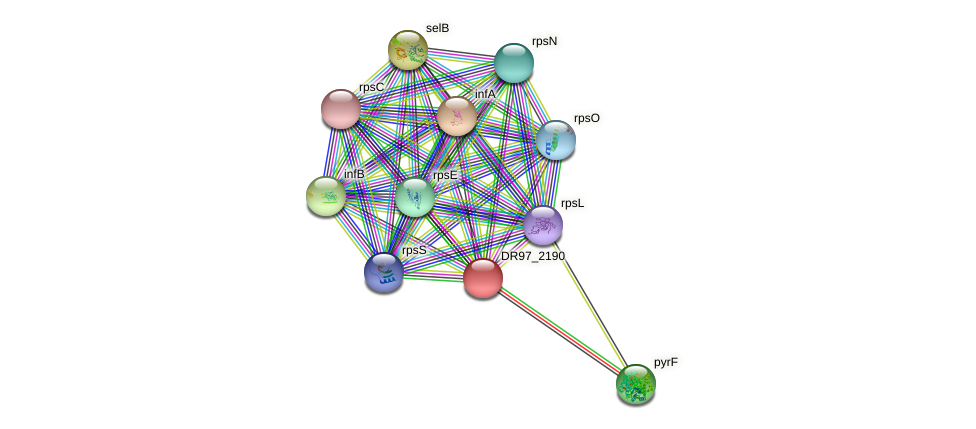 DR97_2190 protein (Pseudomonas aeruginosa) - STRING interaction network