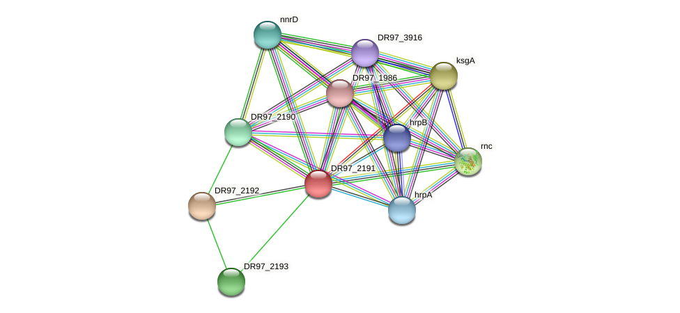 yfcD protein (Pseudomonas aeruginosa) - STRING interaction network