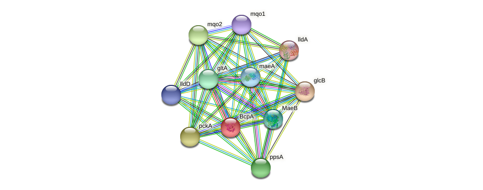 bcpA protein (Pseudomonas aeruginosa) - STRING interaction network